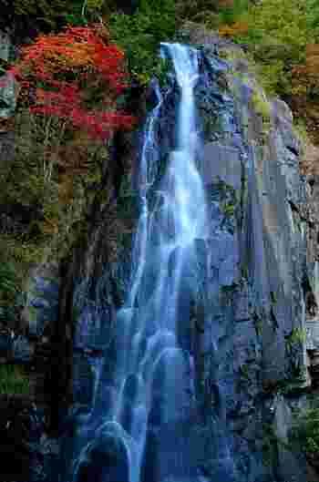 ハイライトとなっている大倉滝は、落差30メートルの滝です。岩肌をなでるように滑り落ちる白いしぶきと、周囲の樹々が融和した見事な景色はいつまで眺めていても飽きることはありません。