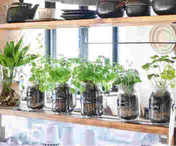 そして、料理にも使えるメイソンジャーを、ハーブポットとして使用。手軽にグリーンインテリアが楽しめます。