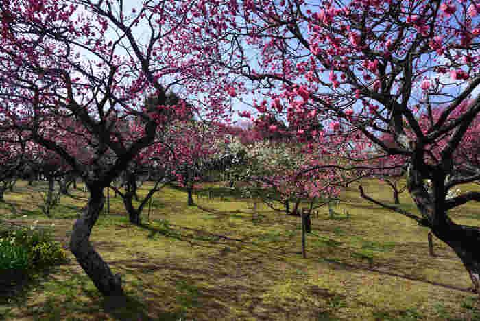 山田池公園は、大阪府枚方市にある山田池とその周囲の自然を生かして形成された公園で四季折々で美しい風景を眺めることができます。