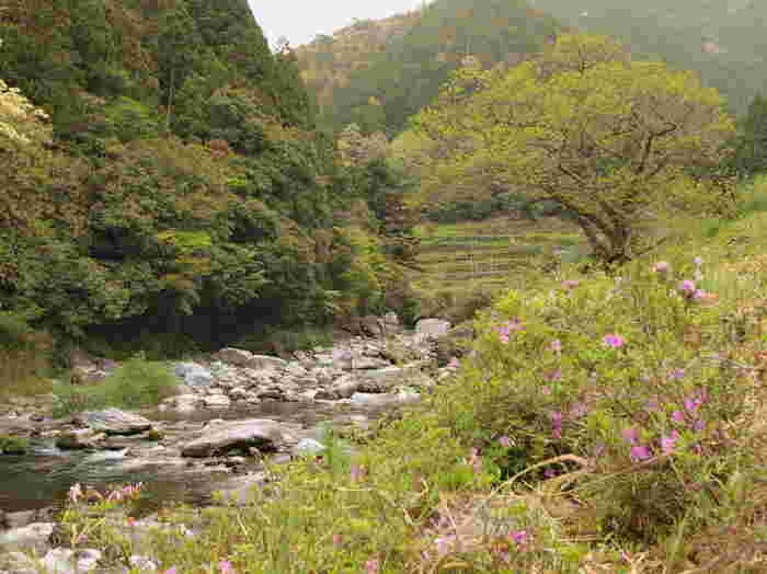 四国地方の水源として大きな役割を果たしている早明浦ダムがある本山町は、高知県北部に位置する町です。