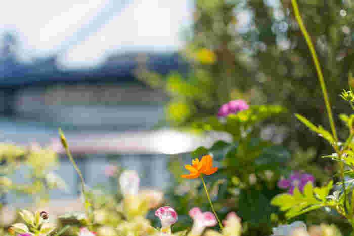 清澄白河おすすめスポット50選|カフェ・美術館・観光も!
