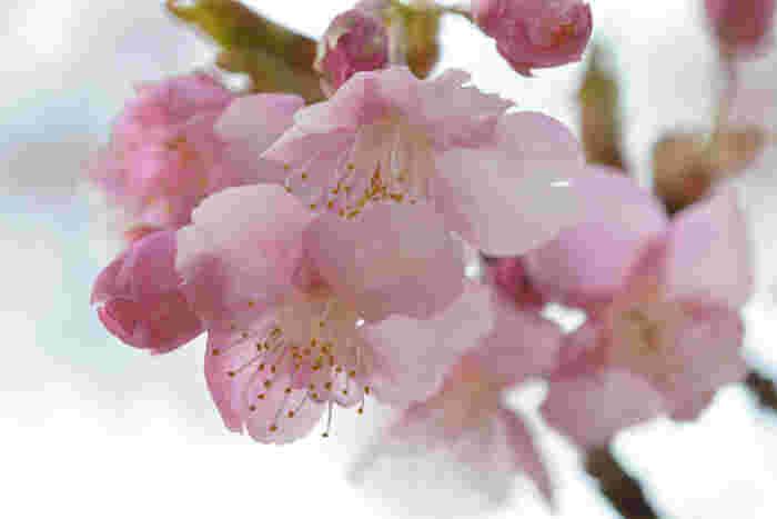 春爛漫とした陽気に包まれながら絶景を楽しもう♪桜の名所13選【東京都編】