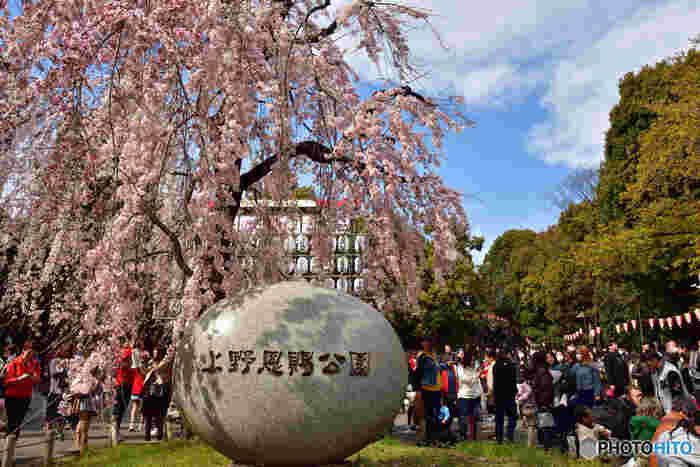 「日本さくら名所100選」に選定されている上野恩賜公園は、東京都随一の桜の名所として知られています。上野恩賜公園の桜の歴史は古く、江戸時代初期に現在の上野恩賜公園の一部に相当する上野の山に桜の木を植樹したことから始まります。