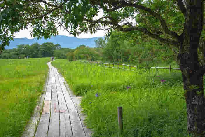 箱根の大自然に触れるのが好きであれば、箱根の壮大な景色を楽しみながら『仙石原すすき草原』から『箱根湿生花園』を歩いたり、乗り物が好きであれば、「大涌谷」の景観、山並みと湖畔の景色を眺めながら、芦ノ湖まで箱根ロープウェイで空中散歩を楽しむのがお勧めです。  【『箱根湿性花園』は、水質地に生育する植物を中心とした、湿地帯や高原地帯等の植物約1,700種を集めた植物園。園内は、湖沼や川、草原や林からなり、園内には展示室がある他、毎日2回専属ガイドの園内散歩が開催されている。開園時期は、毎年3月1日から11月30日(開園期間中は無休)。】
