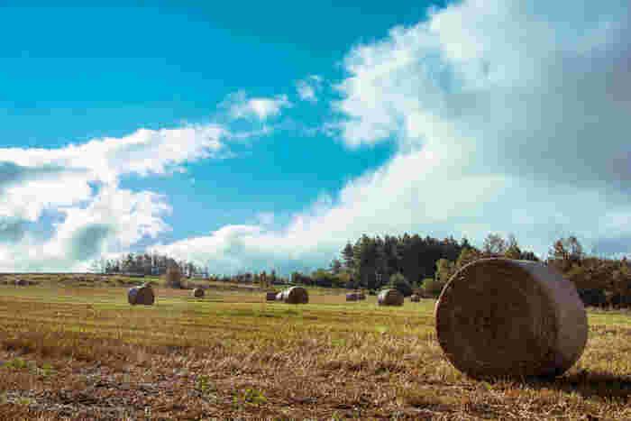 麓郷は、1981年から2002年まで放送されたドラマ「北の国から」の舞台となった一帯で、「日本農村百景」にも選定されている富良野市内でも指折りの景勝地です。