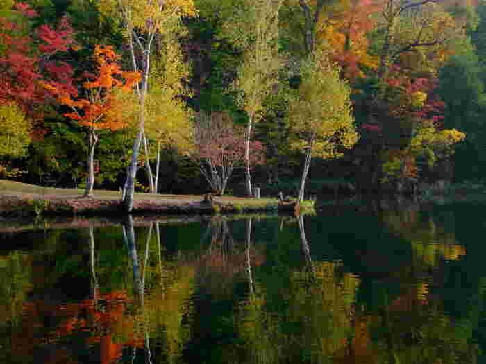 鳥沼公園では、四季折々で美しい景色を楽しむことができます。晩秋になると、公園内の樹々が鮮やかに彩り、短い富良野の秋に華を添えています。