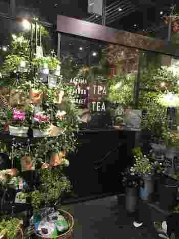 素敵なお花屋さんでお馴染みの青山フラワーマーケットが運営するカフェ。テーマは「温室」ということで、花や緑に溢れたお店です。