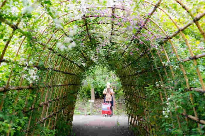 向島百花園の名物にもなっているのが「萩のトンネル」です。毎年9月中旬から10月上旬には「萩まつり」が開催され、萩をお題にした俳句や和歌を詠む方も。園内の中ほどにあるトンネルをゆっくり歩くと、森の中にいるような気分になります。