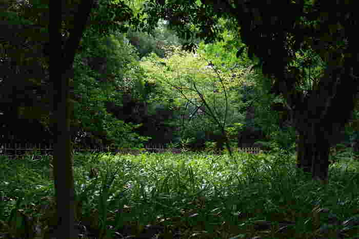 """""""豊かな自然環境""""といっても、単に木々が深く、草花が多いということではありません。【初秋の「皇居東御苑」】"""