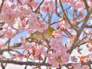 「春分」「冬至」などよく耳にするのが「二十四節気」で1年を24等分して約15日ごとに分けた季節のこと。約2600年も前に中国の黄河地方で作られた暦のため、実際の日本の気候とは若干のずれがあります。 「七十二候」は半月ごとの季節変化を表す「二十四節気」をさらに約5日おきに分け、気象の動きや動植物の変化を知らせるもので、日本の気候や風土に合うよう江戸時代に入ってから何度か改定されています。