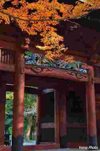 参道を抜けて石段を登り切ると現れる弁柄塗りの「二天門」の左脇には、見事な紅葉をみせる大きな楓があります。 1840(天保11)年に建立されたとされるこの門には様々な彫刻が施され、特に見ごたえのある中央にある龍の彫刻は、平成の大改修で極彩色の色を取り戻しました。
