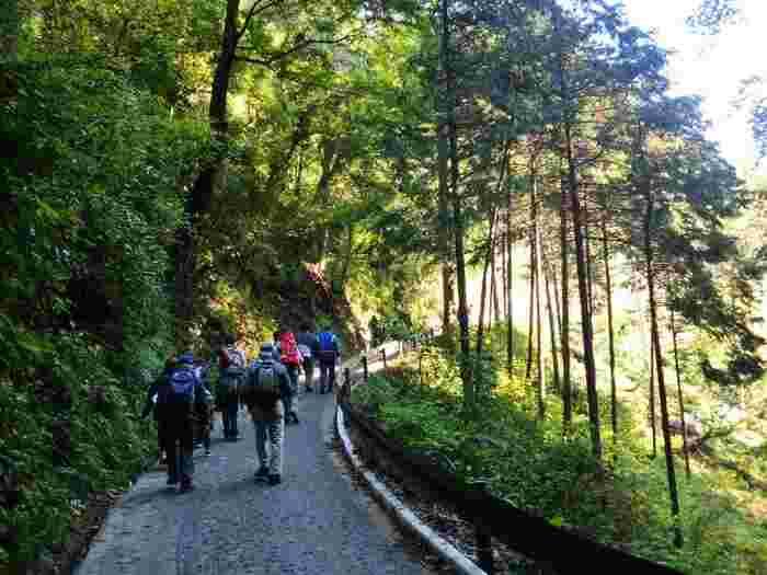 6つある登山ルートのうち1号路はほとんどが舗装されている道路。初心者でも、森の景色をゆっくり眺めながら散策しやすいルートです。