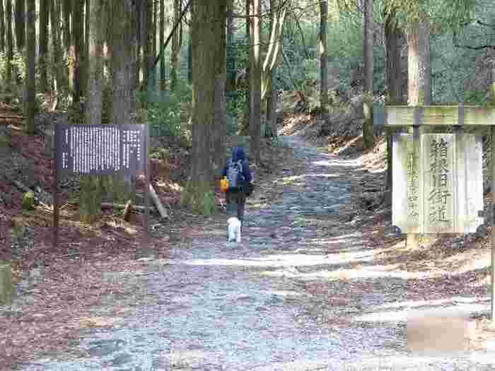 """東京の日本橋から、京都の三条大橋まで全長512kmを繋ぐ、東海道五十三次で知られる「旧東海道」。  その内、小田原宿から箱根湯本の三枚橋、箱根関所、箱根宿、箱根峠、三島宿までの「箱根八里」は、""""箱根旧街道""""と呼ばれています。かつては、泥道の急坂が続く""""天下の難所""""として知られていましたが、江戸初期になって歩きやすい石畳道へと整備されました。  現在も、鬱蒼と茂る杉並木が続く石畳の道は、5地区にわたって(合計で約2km)保存され、国指定の史跡となっています。 この風情ある石畳の道と旧東海道を合わせたルートは、箱根ウォーキングの定番として知られ、ハイカーや観光客が、史跡や名所を訪ねながら、往時の風情を楽しんでいます。"""