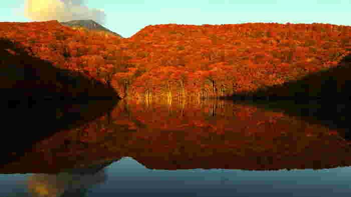 特に有名な紅葉スポットのひとつとしておすすめなのが、青森県のほぼ中央、八甲田山の麓に位置する蔦沼(つたぬま)。燃えるように赤く紅葉した木々が水面に反射している様子はとても大迫力で、思わず息を飲んでしまうような美しさです。