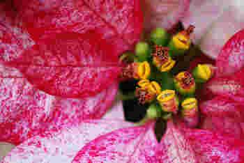 知ればもっと好きになる。季節に咲く花と、素敵な花言葉【冬篇】