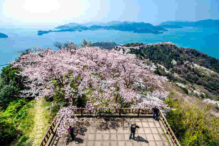 春のおすすめビュースポットは何と言っても積善山の登山道沿いに植えられた3000本を越える桜並木!ピンクの桜が山々を彩り、海の青と美しいコントラストを描きます。