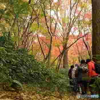 山道は、ぬかるんでいる所も多くあるので、ハイキングの服装でお出かけ下さい。長距離を歩くことになりますので、足に自信の無い方にはおすすめできません。