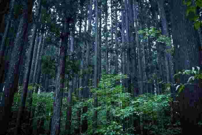 仙台駅から車でおよそ40分。電車やバスのアクセスもよく、仙台市民の心の拠り所「秋保温泉」。落差55mの秋保大滝や磊々峡など美しく力強い自然に囲まれた秋保温泉には様々な温泉宿が立ち並んでいます。早速、秋保温泉でおすすめの温泉宿をご紹介しましょう。