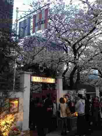 桜の咲く季節はいつも行列ができるほどの人気店。