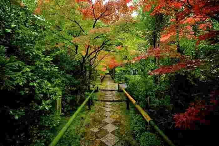 東山・北白川周辺エリアに位置する光悦寺(こうえつじ)は、美しい紅葉が楽しめる場所でありながらも、比較的人が少ないのでゆっくりと楽しめることができる穴場スポットと言われていますが、少なめといっても、そこは京都。紅葉シーズンの休日の昼間ともなると混雑は避けられませんので、静かに眺めるなら朝訪れるのがおすすめです。