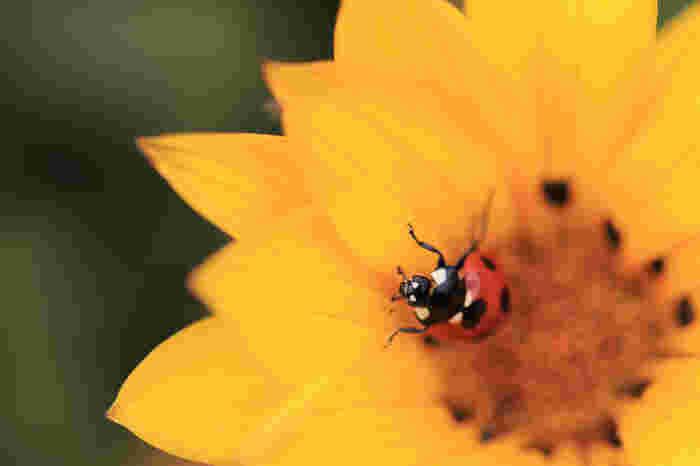 私の場合もともと虫は大丈夫な方で、子どもとあれこれ虫の観察をしたりするのも楽しみの一つでもありますし、すっかり少なくなってしまったミツバチと出逢うと嬉しくなってしまいます。虫と、私達の食べ物の関連性に気付かせてもらったり。でも、田舎は虫が苦手な方には苦痛なのかもしれません・・・。
