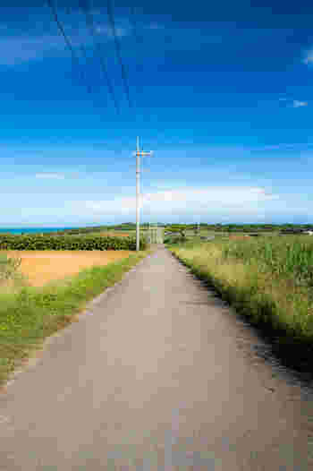 シュガーロード。まるでアニメの世界に出てくるような景色とネーミングですね。その名の通りサトウキビ畑が両側に広がる道です。