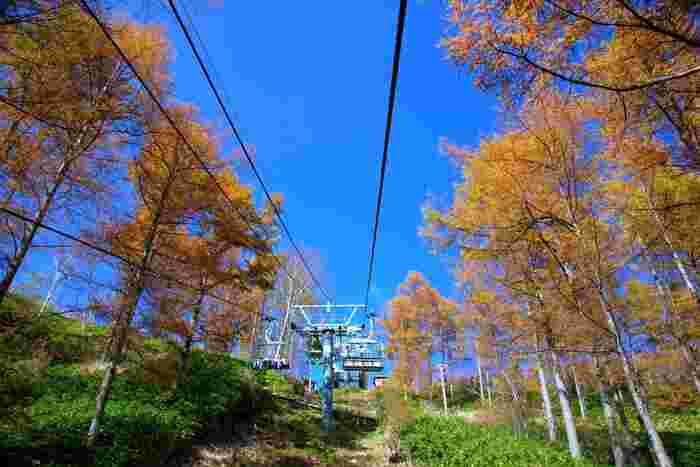 「日本一の星空ナイトツアー」が行われている「富士見台高原ロープウェイ ヘブンスそのはら」は、夜だけでなく昼間の景色も美しい場所。ロープウェイやリフトで展望台や山頂に登ったり、ハイキングも楽しめます。