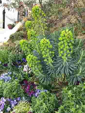 初心者におすすめの庭づくり。北欧風ガーデニングDIY入門