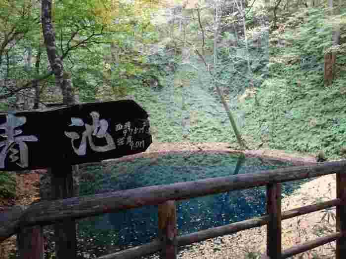 青池の前にはデッキが設置されているので、間近で見ることができます。