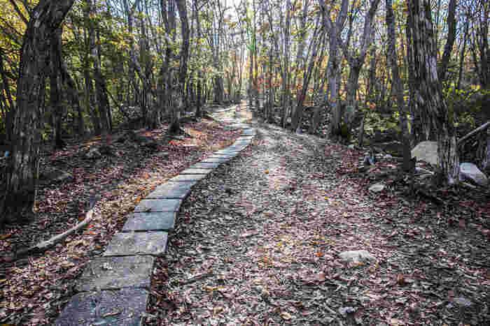 砥峰高原から、車で20分ほどの場所にある、「峰山高原ホテルリラクシア」の敷地内にある「リラクシアの森」も、映画の舞台となった森。  1時間程度で散策できる森ですが、幻想的な雰囲気は、まさに映画の中に入り込んだような錯覚に陥るはず・・・。  星空の美しさにも定評があるので、ゆったりステイしながら、時間を気にせず映画の世界に浸りたいですね。