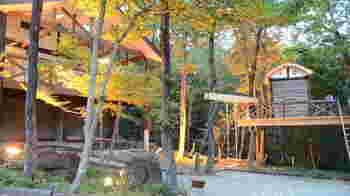 小さなレストランには、敷地内にツリーハウスがあったりとワクワク子供心をくすぐります。木の温もりを感じられますね。