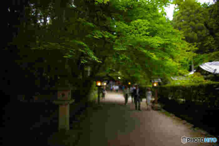 京都市北区に鎮座する大田神社、創建年が不詳の古社で、長寿の御利益などで知られる神社です。