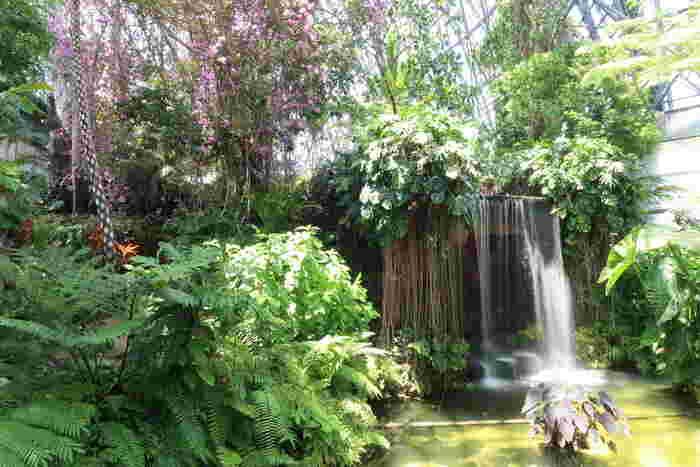温室のなかは、高温多湿の熱帯雨林の環境をモデルにしていて、ツルやシダ植物が生い茂っています。温室内は、まさに東南アジアやアマゾン川流域にいるような気分を体感できますよ。