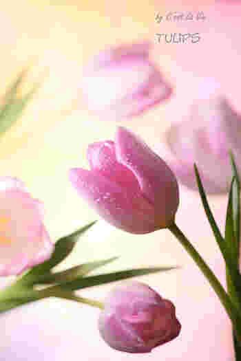 """ピンクには""""思いやり""""という花言葉もあるんですって(^.^)"""