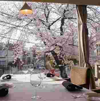 駒沢公園近くにあるイタリアンレストラン。窓が広く、桜並木を目の前にして食事ができます。