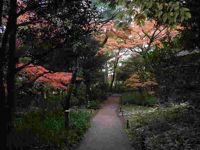 湧き水などもあり、駅前の喧噪から離れて過ごせます。季節の草花を探して、ゆっくり散策してみてはいかがでしょうか?