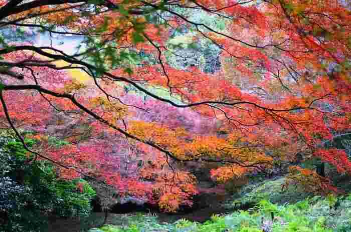 吉野山といえば、古くから知られている桜の名所ですが、実は隠れた紅葉の名所でもあります。吉野山は広く、下千本、上千本、奥千本とそれぞれで紅葉の時季が異なるため、長く紅葉シーズンを楽しむことができるという特徴もあります。
