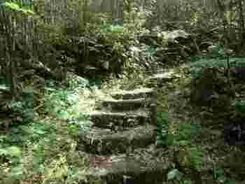 大凸部への登山道は、神秘的な雰囲気が漂います。
