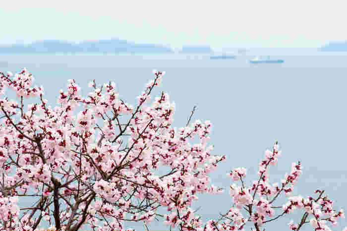 大小31の島々から成る「笠岡諸島」。春の花というと梅や桃、桜が思い浮かびますが、杏も3月下旬から4月頃に咲く春の花。海のパステルブルーに淡いピンクの花が映え、穏やかな春の陽気が感じられそうです。