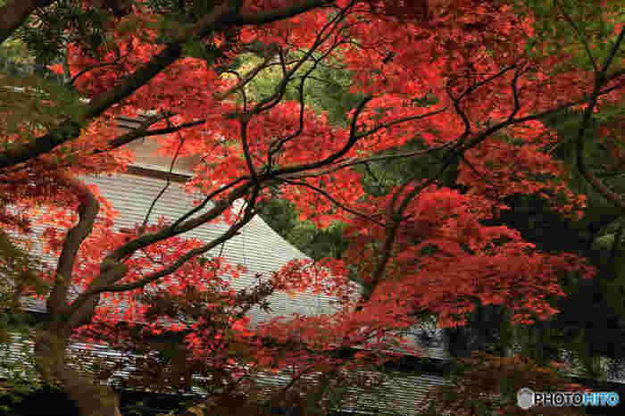 1218年、北条義時によって建てられた大倉薬師堂が覚園寺の始まりです。古趣あふれる自然環境と一体となった空間が、厳かな佇まいを感じさせます。