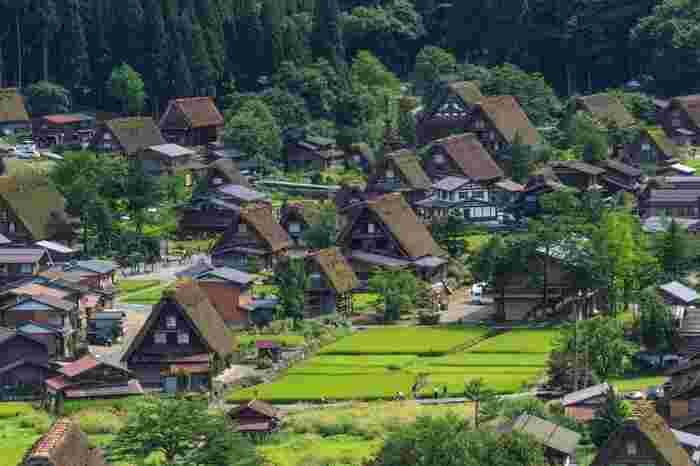 世界遺産にも登録されている白川郷は、岐阜県の庄川流域の呼称であり、中でも荻町地区は合掌造りの集落として有名で、現在も荻町地区は、実生活の場として使われています。1976年に重要伝統的建造物群保存地区として選定され、さらに1995年にはユネスコの世界文化遺産に登録されました。