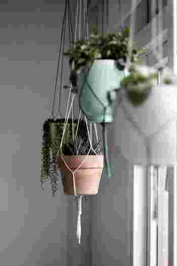 目線より高い位置にグリーンを吊るすと、お部屋が一気にイキイキとしたものになります。カーテンレールやラダーラック、ハンガースタンドに吊るす方法が簡単です。 天井にハンギングフックを取り付ける際は、下地の位置を確認します。いずれの方法も、重量や強度に注意することが大切です。