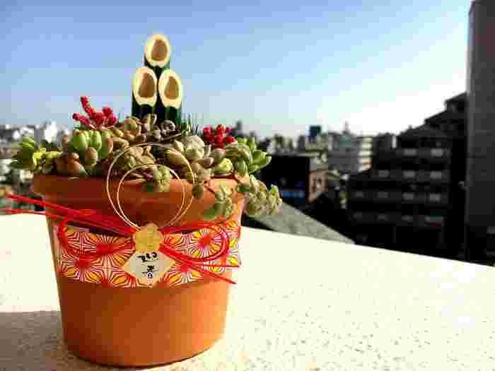 多肉植物と一緒に門松を飾って。鉢に水引をかけるとぐっとお正月らしくなります。