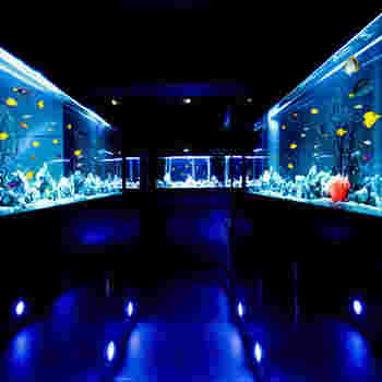AQUARIUM個室 青の洞窟 難波店は、大阪メトロなんば駅から徒歩で約1分の好立地にある創作料理のレストランです。お店の中に一歩足を踏み入れると、巨大なアクアリウムが広がっており、まるで異世界に迷い込んだような錯覚を感じます。