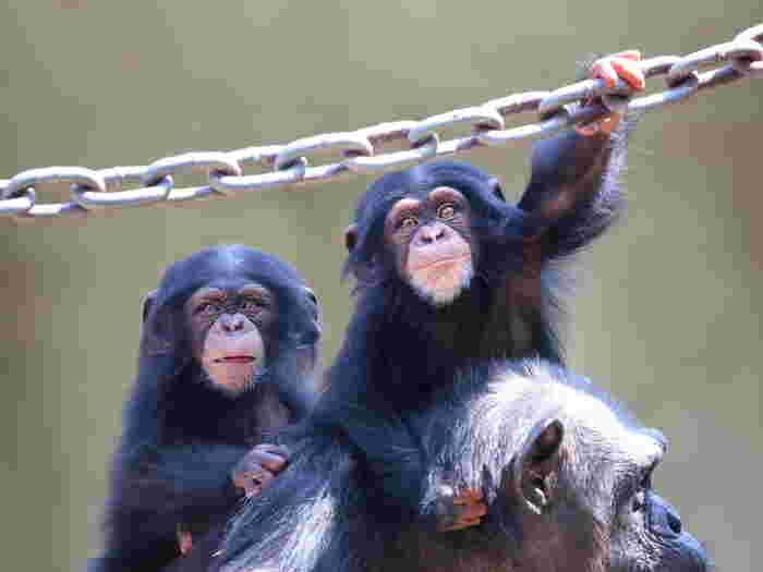 動物園、大人になってから行くと、また違った楽しさを感じることが出来ますよ♪ただ「可愛い」だけでなく、生態や歴史にも着目すると新たな発見がありますよ。子どもから大人まで楽しめる動物園、ぜひ癒やしと刺激と発見を求めに行ってみてはいかがでしょうか?