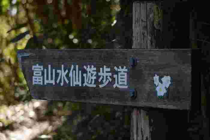 「道の駅 富楽里とみやま」から1km程にある「富山水仙遊歩道」では、水仙の群生地を花の香りを楽しみながら散策することが出来ます。水仙が見頃の1月には、スタンプラリーが開催されます。詳細は、富楽里とみやまインフォメーションへ。