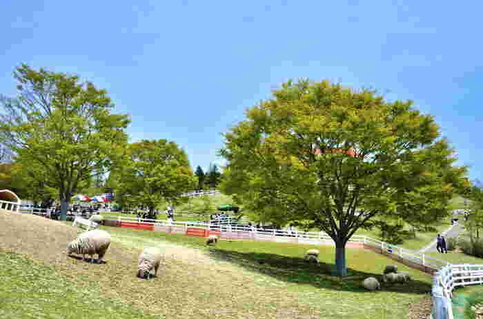 六甲山牧場は、六甲山上に広がる高原牧場で、放牧されている羊やヤギと触れ合うことができます。阪急六甲駅やJR六甲道駅などから、バスやケーブル、ロープウェイを使って行くことができます。六甲山からの眺めを楽しみながらのドライブもおすすめです。