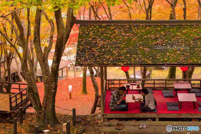険しい石段が続く神護寺参道には、何軒かの茶房があります。鮮やかに彩った樹々を眺めながら、雄大な大自然に囲まれた茶房でのんびりと過ごす贅沢なひとときを味わってみませんか。