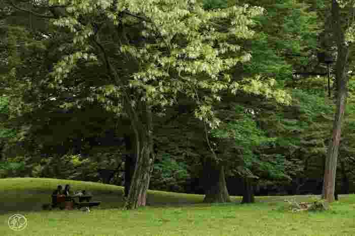 自然が豊かな園内は、東京都心部とは思えないほど時間がゆっくりと流れます。