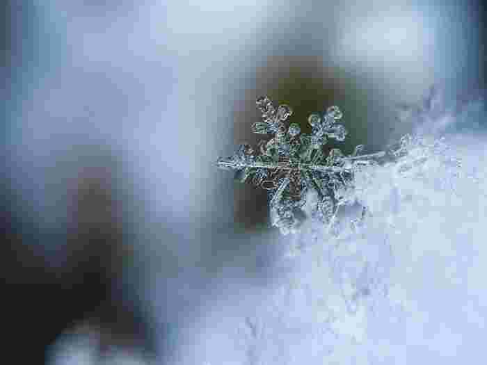 寒さに強い品種でも霜が降りたり、土が凍結したりすると枯れてしまう場合も。マルチングといって土の表面を覆っておくのがおすすめです。ビニールやワラ、バーク堆肥、腐葉土などを使う方法があります。合わせて植物全体を覆う防寒対策もしておくと◎